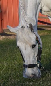 Grazing Muzzles & Thinline products
